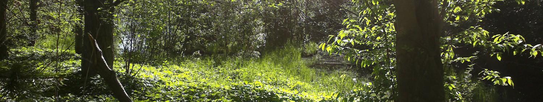 cropped-030620110902.jpg