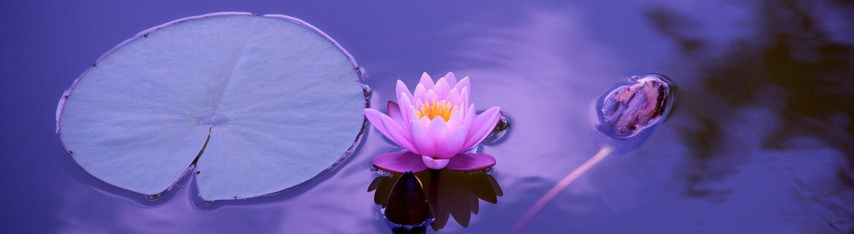 cropped-lotus-1205631_1920.jpg